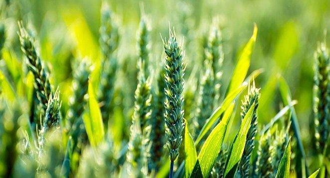 zekat poljoprivreda